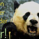 Google Panda Refresh 4.2 – Infos zum aktuellen Google-Refresh