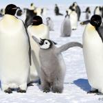 OMSAG-Blog: Google Penguin Update 4.0 und die Auswirkungen auf Suchmaschinenoptimierung